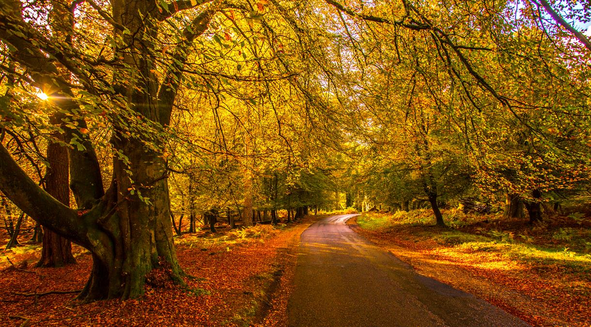 50 things to do this Autumn in Hampshire 2021
