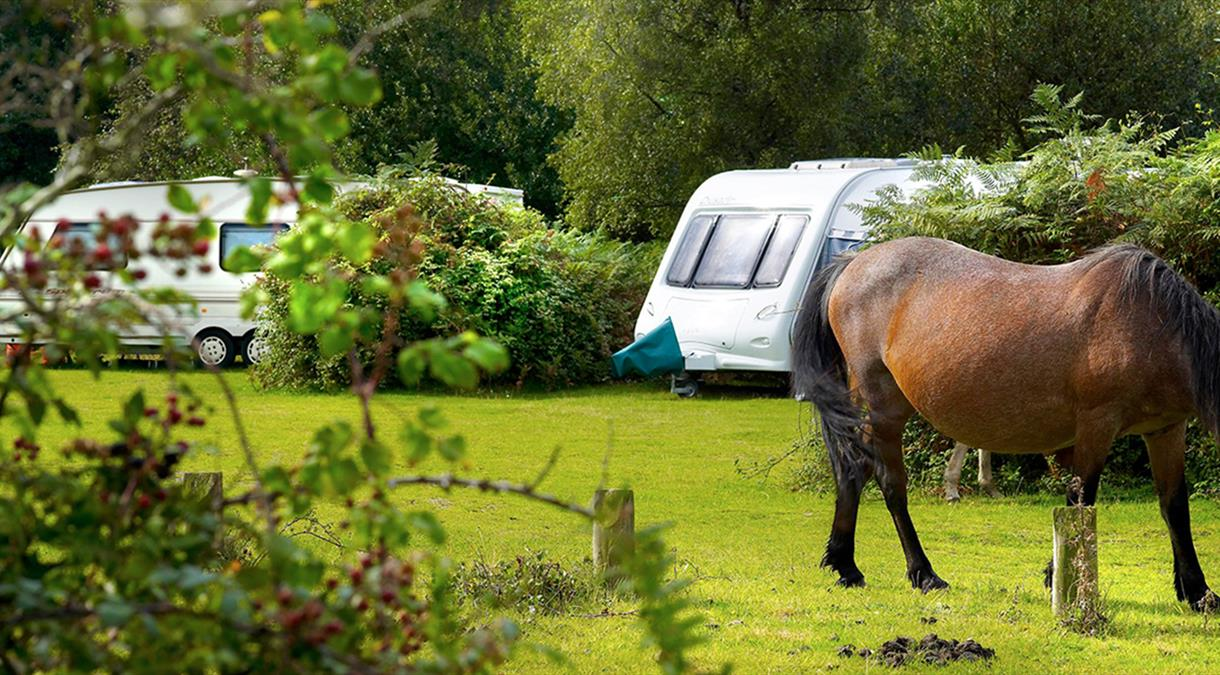 Hampshire Campsites
