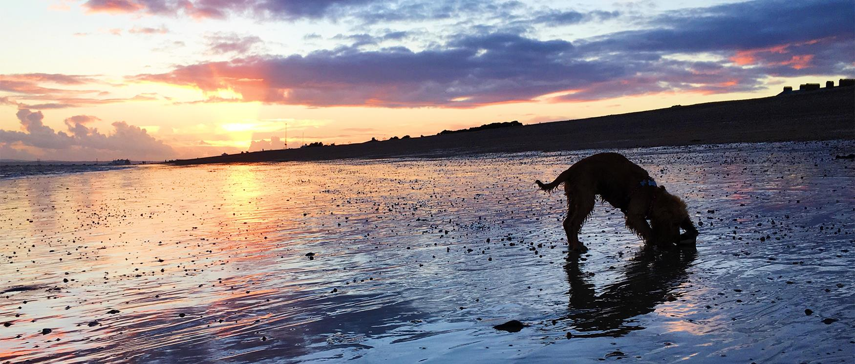 Dog on Southsea Beach in the Sunset