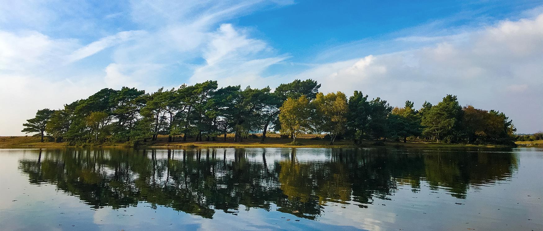 Hatchet Pond, New Forest
