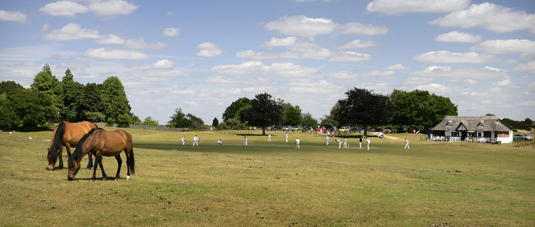 Cricket in the New Forest