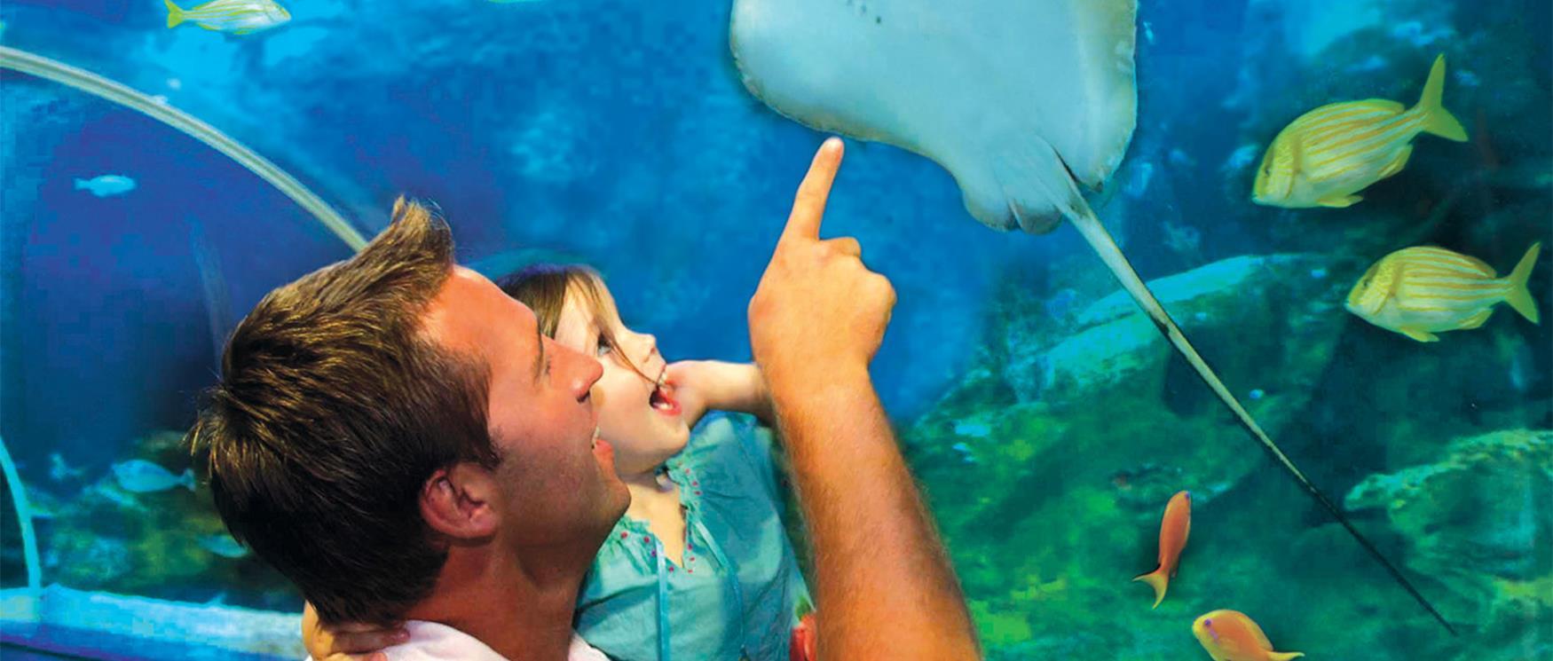 Blue Reef Aquarium in Portsmouth