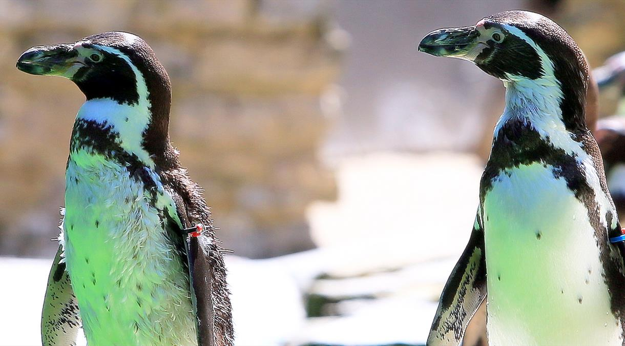 Zoos and Aquariums in Hampshire