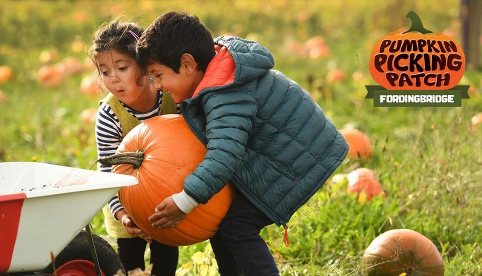 Pumpkin Picking Patch Fordingbridge