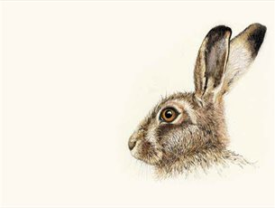 Portrait of a Wild Hare