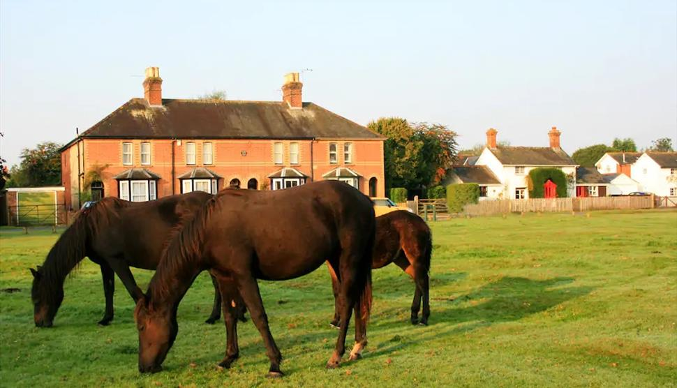 Waterley Cottage in the New Forest
