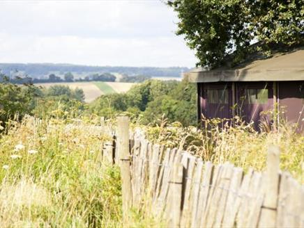 Feather Down - Manor Farm