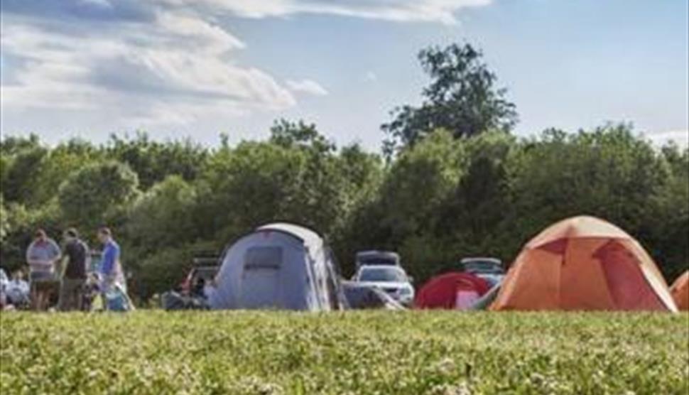 Abbotstone Wood Camping