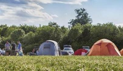 Abbotstone Wood Camping