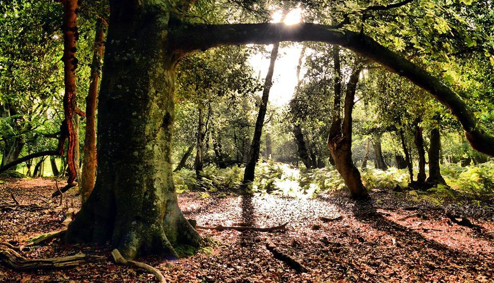New Forest: Ashurst Stroll Walk