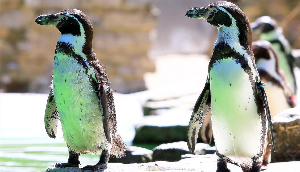 Penguins at Birdworld