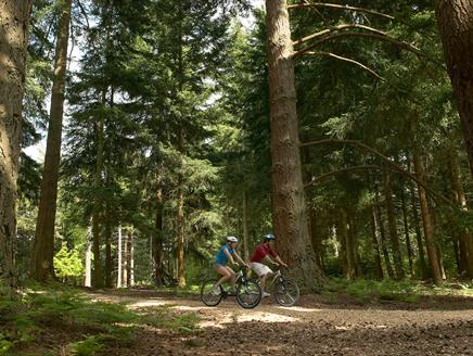 Gravel Cycle Trail Circular Route from Brockenhurst, New Forest