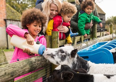 Manor Farm Animal Feeding