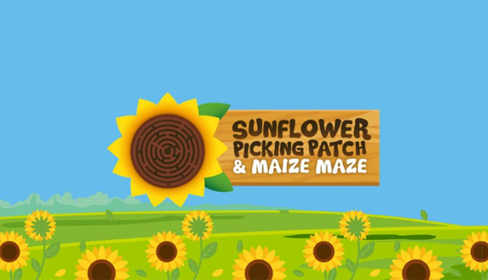 Maize Maze & PYO Sunflowers