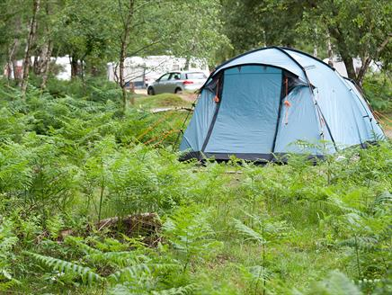 Matley Wood Campsite, New Forest
