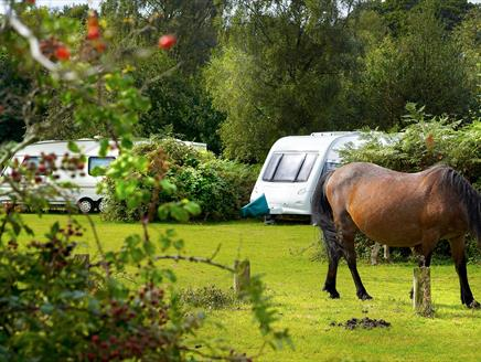 Ocknell Campsite, New Forest: Visit-Hampshire.co.uk