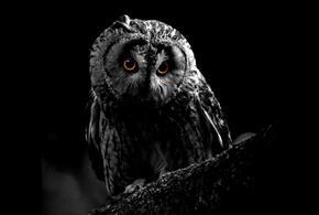 Owl-O-Ween at Hawk Conservancy Trust