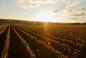 The Grange Hampshire - Wine Tour, Picnic and Tasting