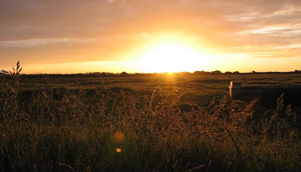 Farlington Marshes Wildlife Reserve