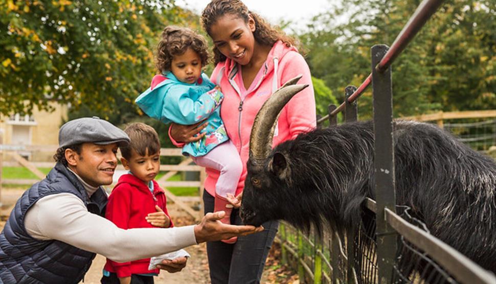 Animal Feeding at Staunton Country Park