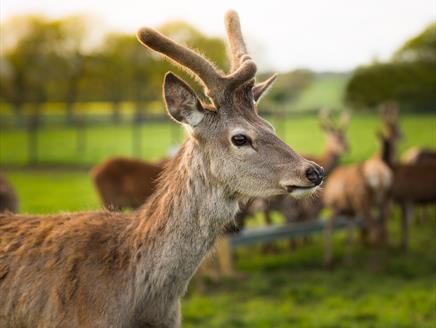Deer at Sky Park Farm