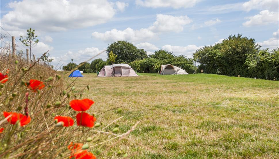 Watercress Campsite