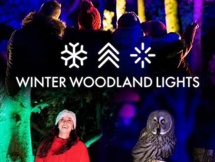 Winter Woodland Lights at Hawk Conservancy Trust