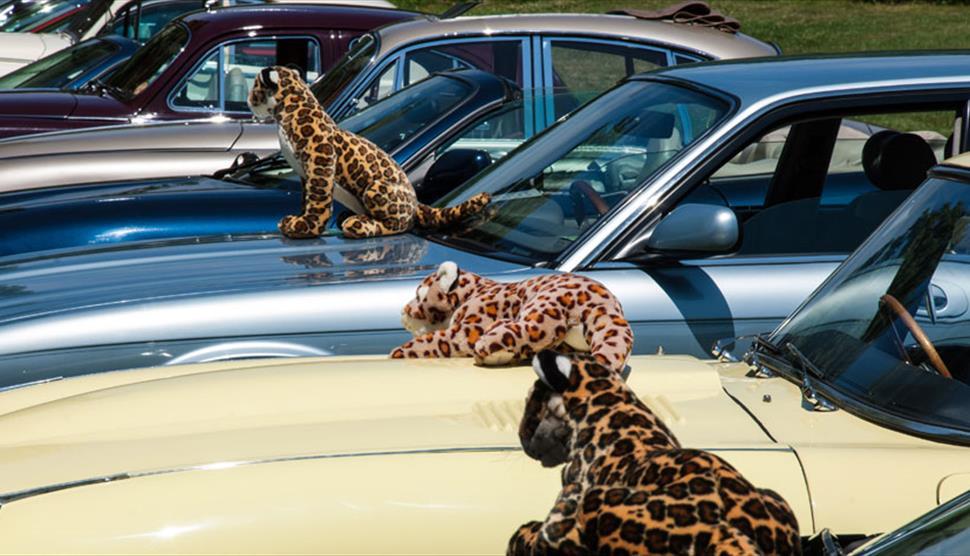 Simply Jaguar at Beaulieu