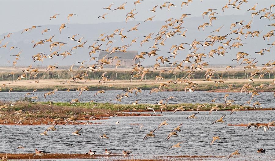World Wetlands Day Walk 1