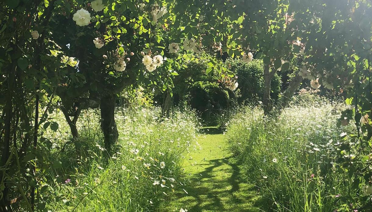 Meadow at King John's Nursery and Garden, Etchingham, East Sussex.