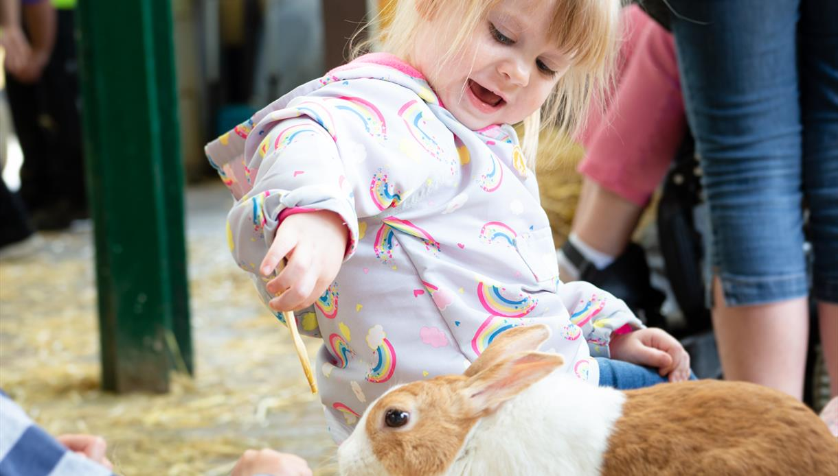 Children playing with rabbits at the Rare Breed Centre