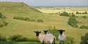 A view from Great Prawls Farm, near Rye in East Sussex