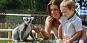 A mum and boy feeding a lemur at Drusillas Park
