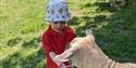 Lamas, Farm, Cream Tea , Robertsbridge
