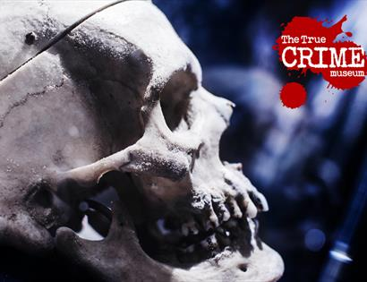 A close up photograph of a human skull, at side profile. The True Crime Museum logo is in the top right of the image.