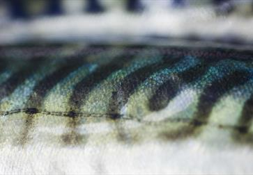 a close up of fish scales