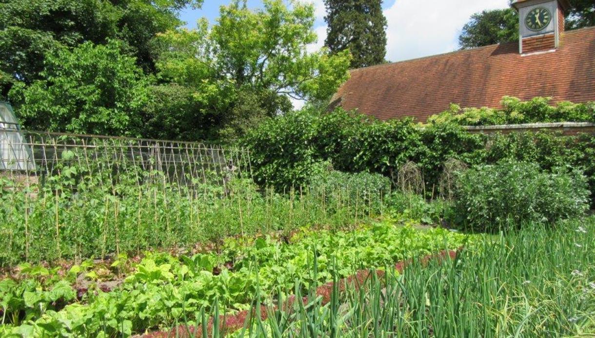 Pashley Manor Gardens - kitchen garden