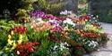 Tulip display at Great Dixter, Northiam, near Rye. © Carol Casselden