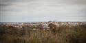 View at Tillingham Wines, Peasmarsh, East Sussex
