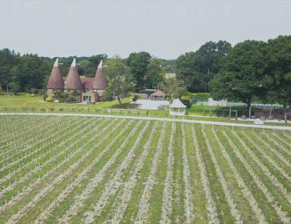 Oastbrook Estate Vineyard, Robertsbridge, East Sussex