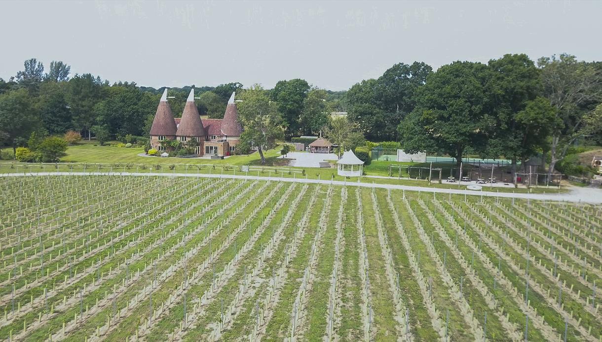 Oastbrook Estate Vineyard, Robertsbridge, East Sussex