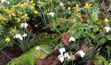 Cornwall Garden Society Spring Flower Show