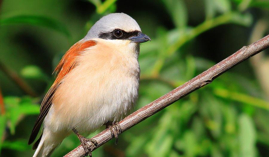 Bird Migration Walk