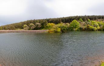 Ballure reservoir, looking towards the dam