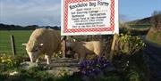 Knockaloe Beg driveway, look out for the sheep.