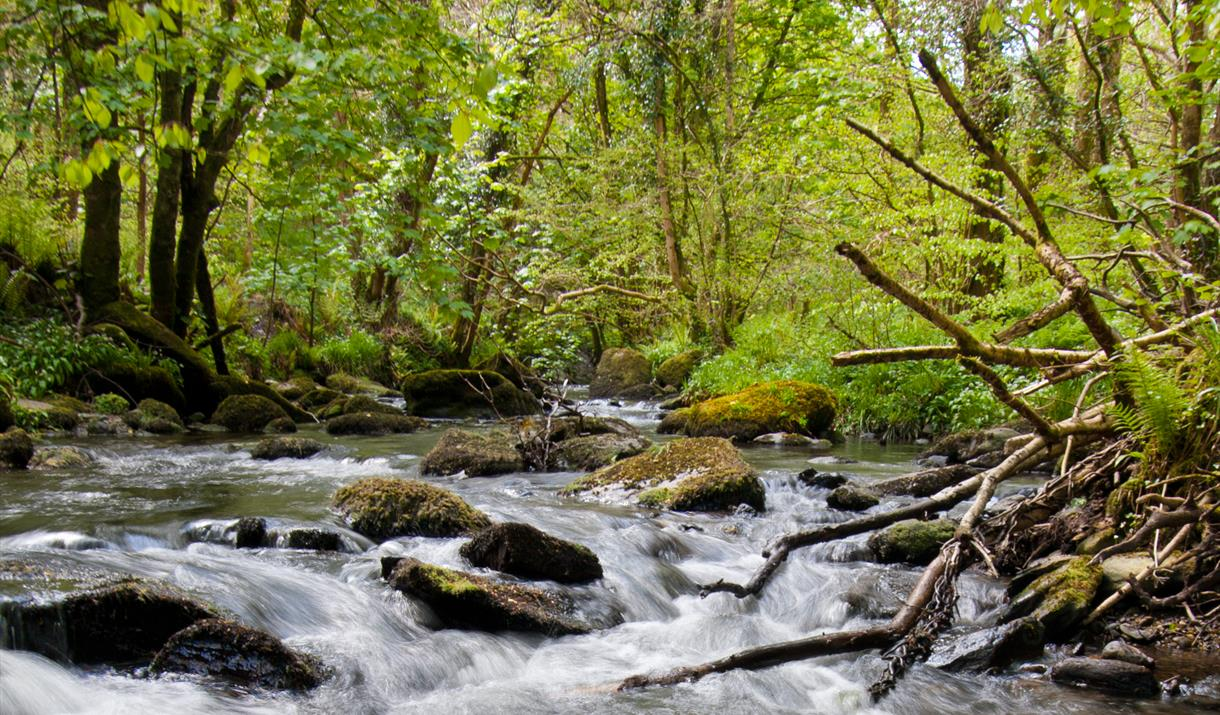 The Glen Roy tributary of the Laxey River