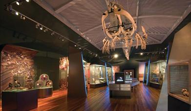 Natural History and Wildlife Gallery