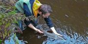 Returning a Sea Trout to the Neb