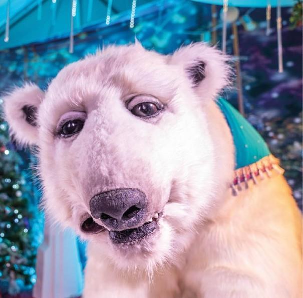 Pippa the polar bear at POLAR
