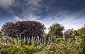 Ventnor Botanic Garden, Ventnor, Things to Do, Outdoor space